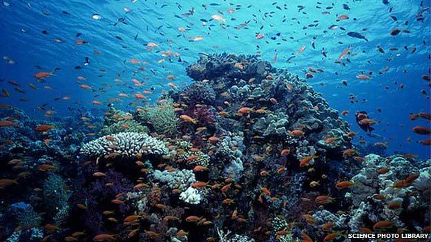 La salud de los océanos en rápido declive
