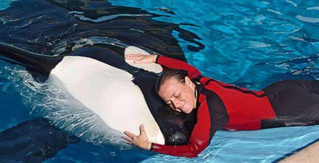 la orca Tillikum y Dawn Brancheau
