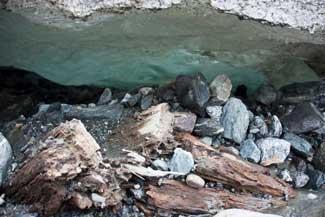 tocones de árboles en la base del glaciar Mendenhall, Alaska