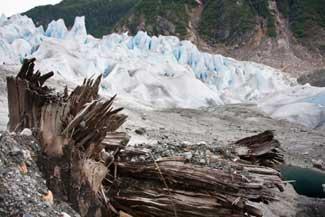 tronco de árbol en la base del glaciar Mendenhall, Alaska