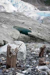 troncos de árboles en la base del glaciar Mendenhall