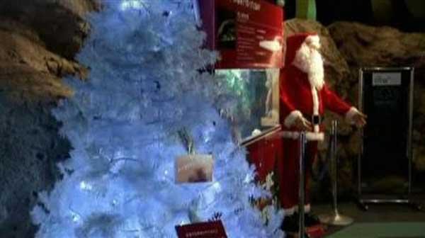 árbol de Navidad iluminado por anguila eléctrica