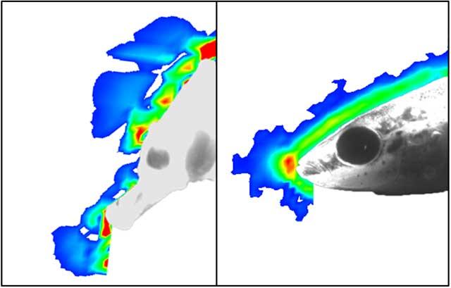 comparación de la perturbación del agua del caballito de mar