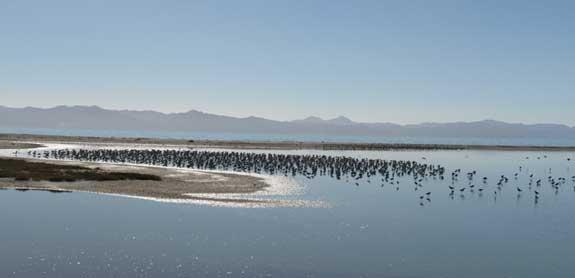 colonia de aguja colipinta en Nueva Zelanda