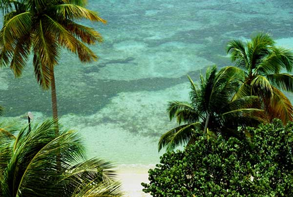 isla de Guadalupe