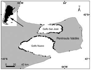 lugares muertes ballenas en Península Valdés