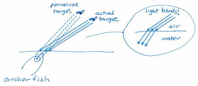 el pez arquero corrige la curvaturade la luz
