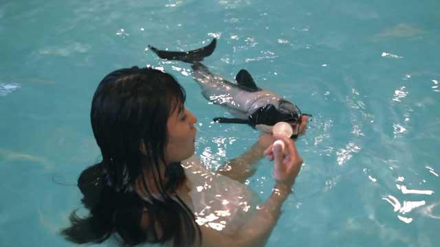 Quiero parir un delfín, alimentación