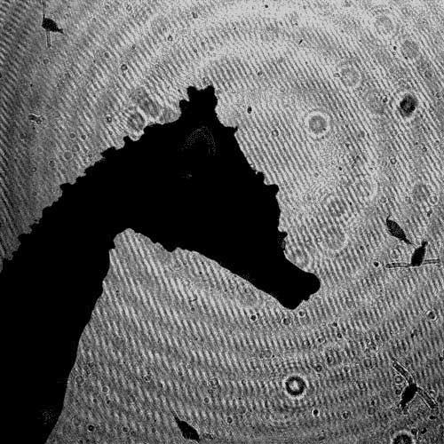 sigilo hidrodinámico del caballito de mar