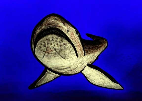 tiburón boca ancha extinto, dibujo