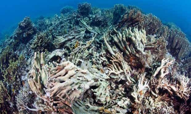 arrecife dañado con dinamita en Danajon Bank