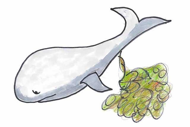 ballena haciendo caca