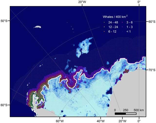 distribución ballenas minke en el Mar de Weddell