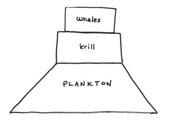 cadena alimentaria ballenas - krill - plancton