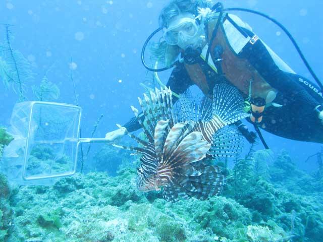 captura de un pez león con red