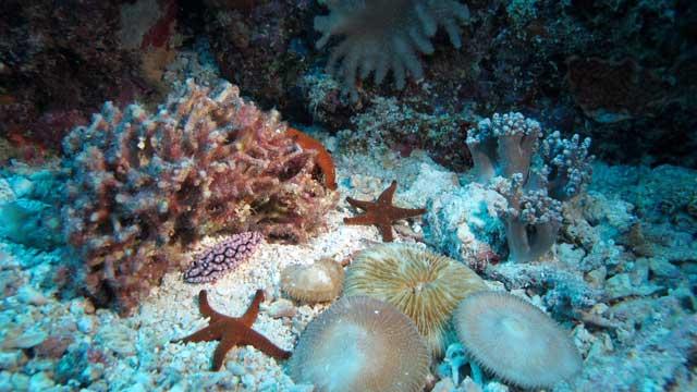 time-lapse Gran Barrera de Coral