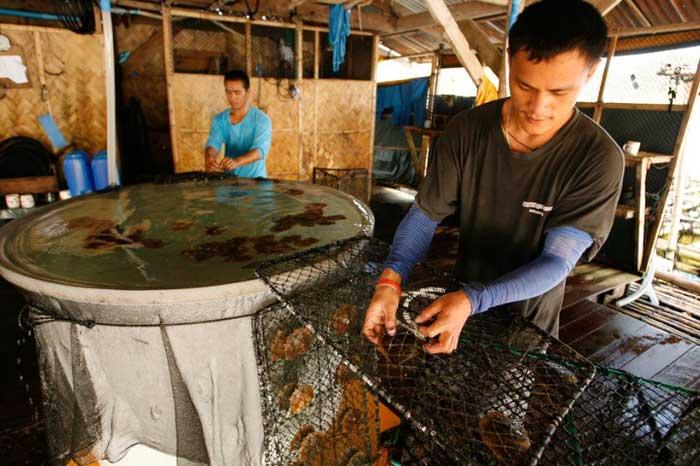 cultivo de perlas en Filipinas