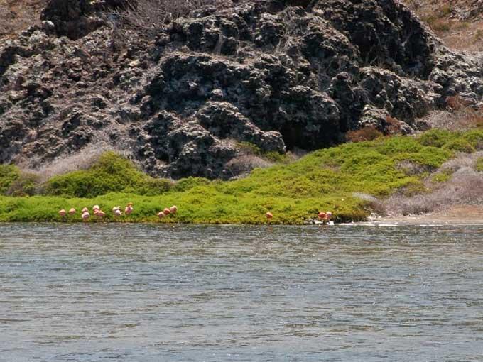 flamencos en la laguna de las Rocas Bainbridge