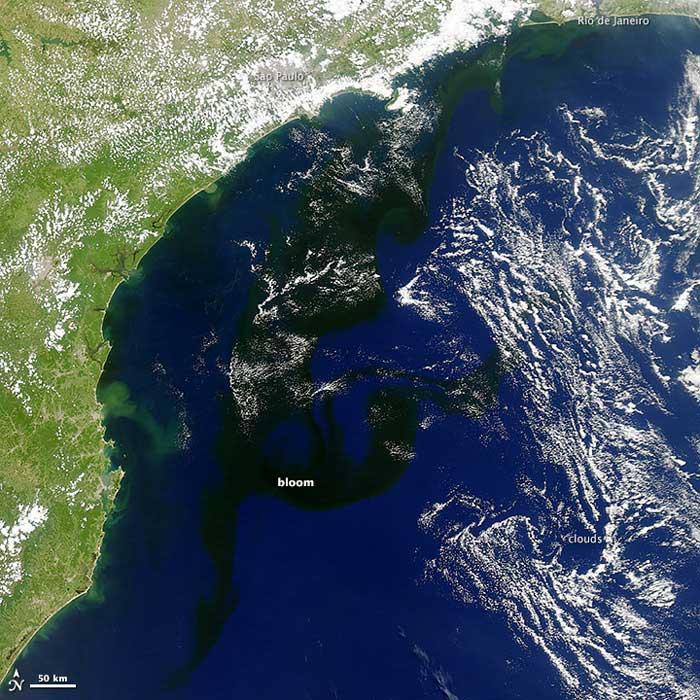 floración negra en el Atlántico sur