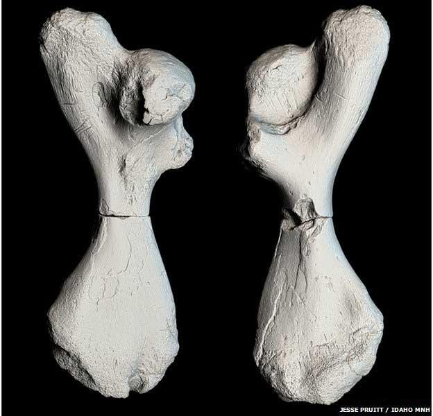 fósiles de Atlantochelys mortoni