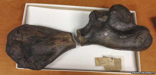 fósiles Atlantochelys mortoni