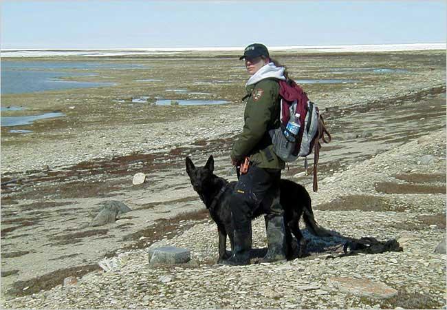 Linda Gormezano y su perro Quinoa especializado en el seguimiento de osos polares