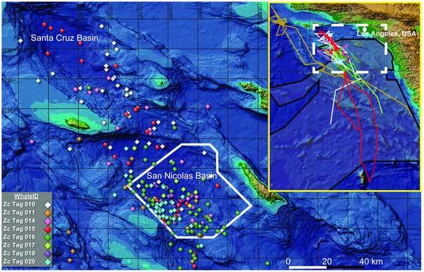 mapa del seguimiento de las ballenas picudas