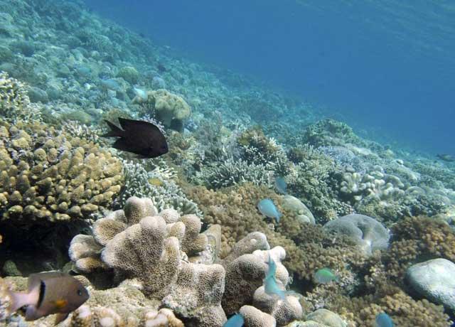 ecología de las profundidades del mar