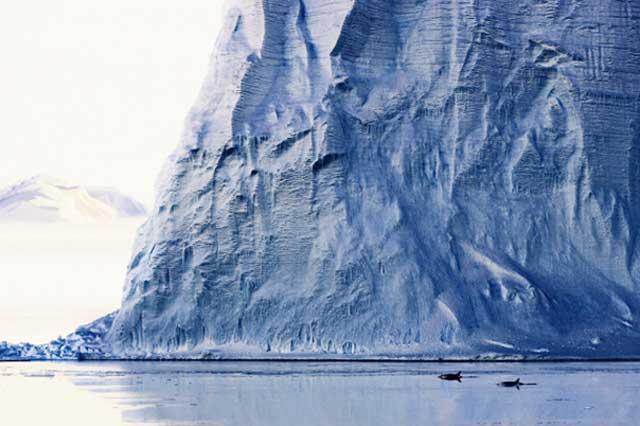 orcas en la Antártida
