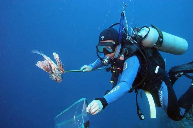 pesca submarina del pez león