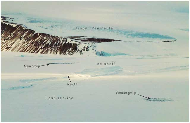 pingüinos emperador en la plataforma de hielo Larsen