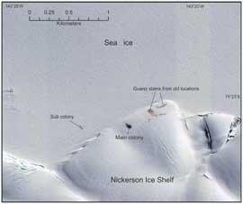grupos de pingüinos emperador en la plataforma de hielo Nickerson
