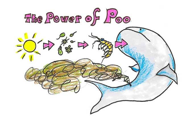 el poder de la caca de ballena