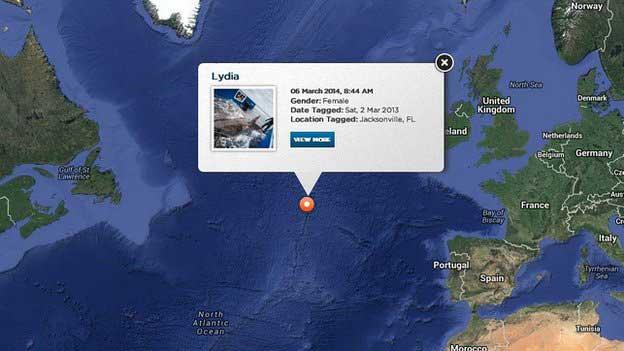 situación del tiburón blanco Lydia