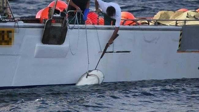 tiburón muerto por un disparo en Australia