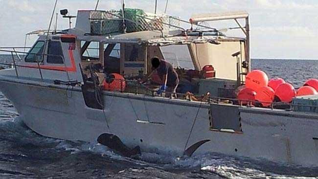 tiburón muerto en Australia