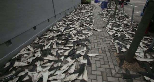 Aletas de tiburón en las calles de Sheung Wan