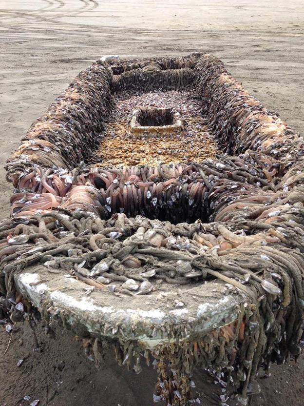 bote del tsunami de Japón varado en Washintong
