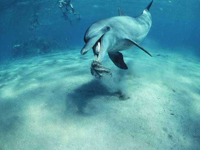 Las ballenas y los delfines sólo perciben el sabor salado