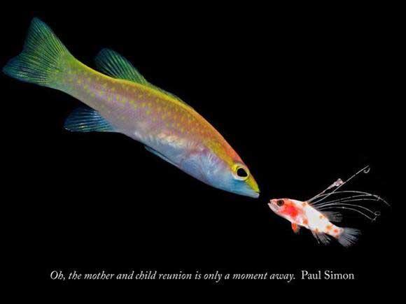 comunicación entre peces