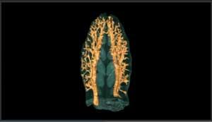 escáner del hocico de un pliosaurio