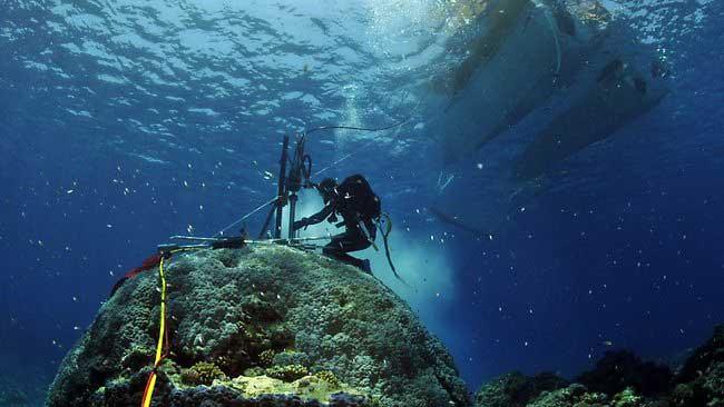 extracción de nucleo del coral porites
