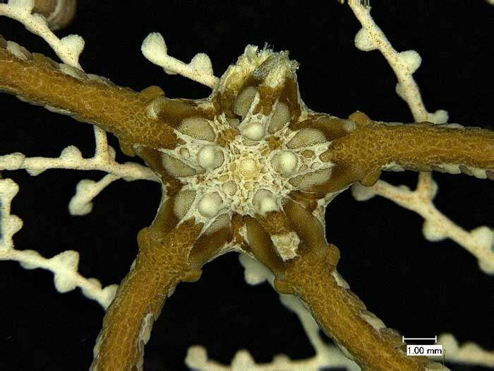 fosil marino de las profundidades