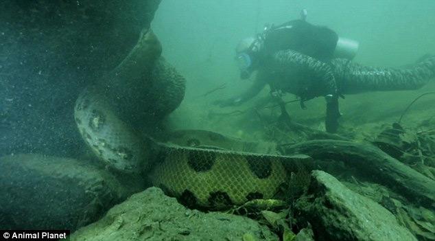 Jeremy Wade cara a cara con una anaconda
