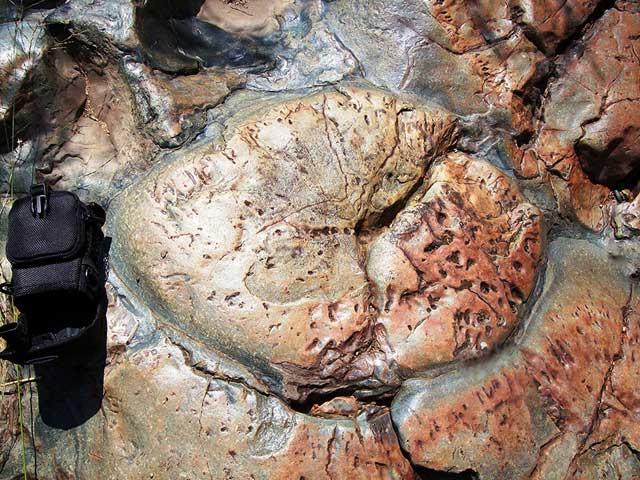 lava basáltica de Barberton Greenstone