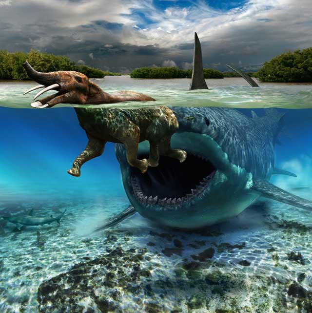 megalodon ataca a un Platybelodon