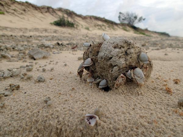 mejillones en una piedra pómez