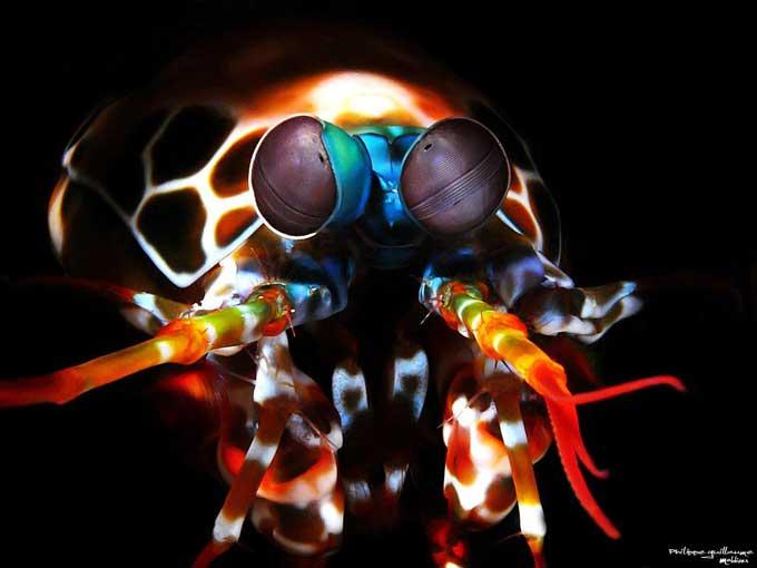 ojos de un camarón mantis