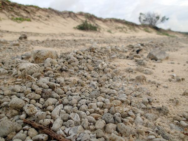 piedra pómez en Moreton island