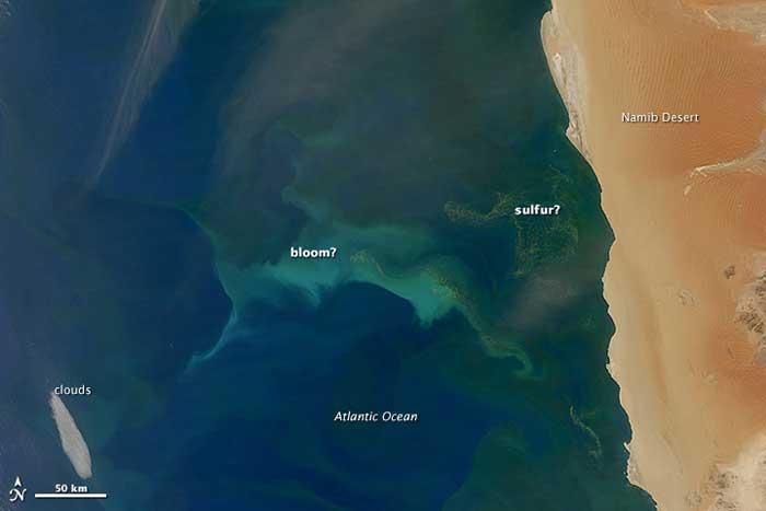 Plancton y azufre en la corriente de Benguela